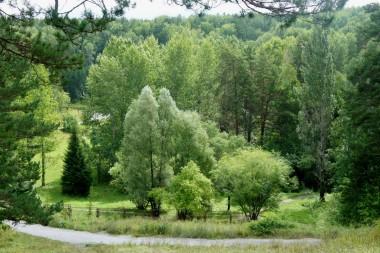 Центральный Сибирский ботанический сад СО РАН, Новосибирск. Дендрарий, нижняя зона