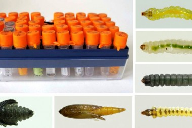 ДНК-штрихкодирование североазиатских насекомых и расшифровка их генетических данных